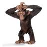Młody szympans new 2013 (14680)