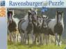Puzzle 500 Dzikie konie  (141814)
