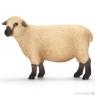 Owca odmiana Shropshire (13681)