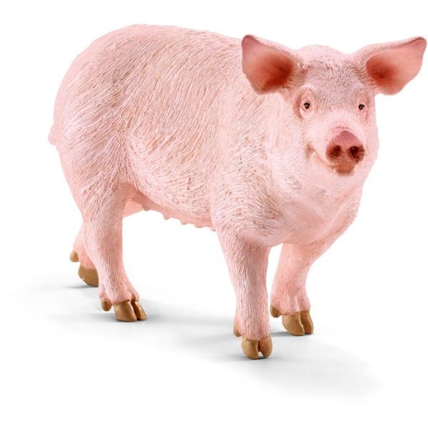 Świnia - 13782