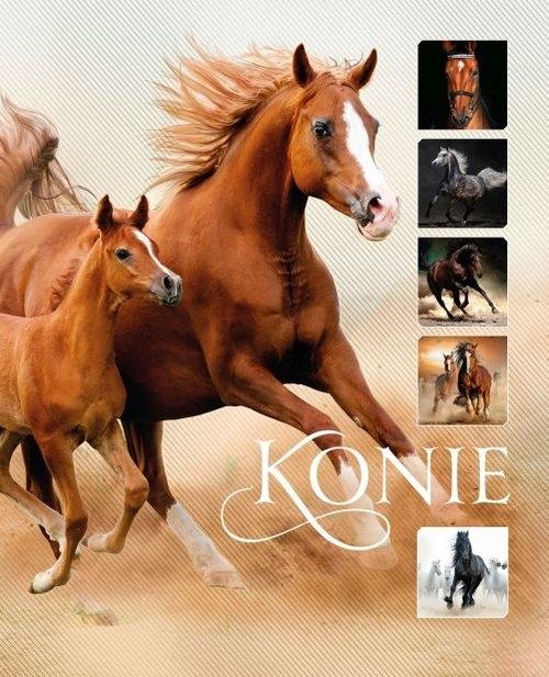 Konie Walkowicz Ewa