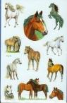 Naklejki na błyszczącym papierze Z Design Konie