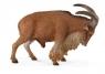 Owca grzywiasta L
