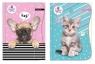 Teczka z gumką A4 The Sweet Pets Kids mix