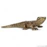 Młody krokodyl new 2013 (14683)
