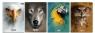 Zeszyt A5 w kratkę 60 kartek Wild