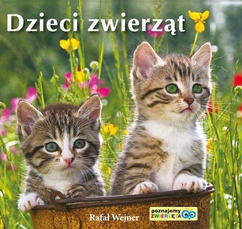 Dzieci zwierząt Poznajemy zwierzęta Wejner Rafał