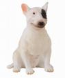 Pies rasy bullterier suka M (88385)