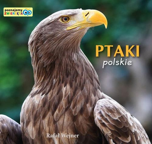 Ptaki polskie Poznajemy zwierzęta Wejner Rafał