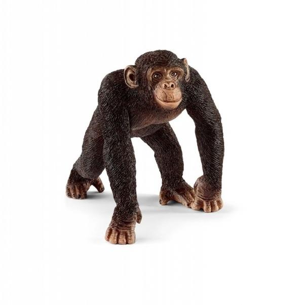 Szympans, samiec - 14817