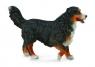 Berneński pies Pasters L (88801)