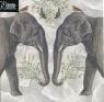 Karnet kwadrat z kopertą Indian Elephant