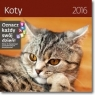 Koty. Kalendarz ścienny 2016