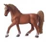 Koń American Saddlebred