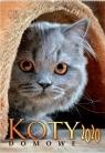 Kalendarz 2020 Reklamowy Koty domowe RW27