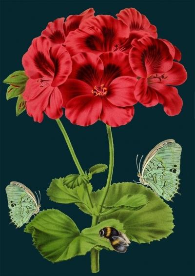 Karnet B6 z kopertą Pszczoła i motyle