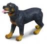 Pies rasy rottweiler L (88189)