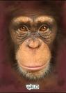 Zeszyt A5 Wild w kratkę 60 kartek Małpa
