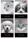 Zeszyty Dan-Mark Cat&Dog LAMINOWANY A5 krata 32 (1068)