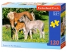 Puzzle Ponies in the Meadow 120 elementów (12909)