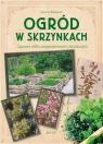 Ogród w skrzynkach Uprawa roślin przyprawowych i leczniczych Bourgeois Laurent