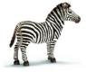 Zebra samiec (14391)