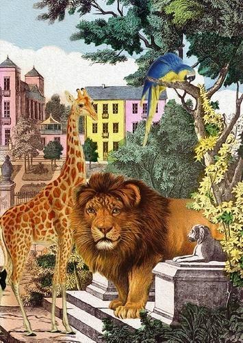Karnet B6 z kopertą Dzikie zwierzęta