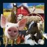 Magnes 3D - Życie na farmie