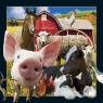 Pocztówka 3D Życie na farmie