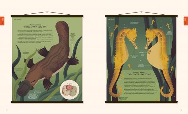 Świat przyrody Wood Amanda, Jolley Mike