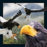Pocztówka 3D Jastrząb