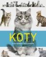 Koty. Ilustrowany przewodnik praca zbiorowa