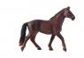 Koń KWPN