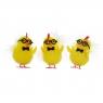 Kurczaki w okularach (YX5938)