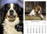 Kalendarz planszowy 2021 - Psy 13