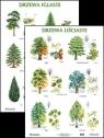 Plansza - Drzewa liściaste, drzewa iglaste