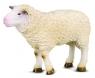 Owca M (004-88008)