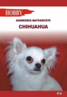 Chihuahua Matuszczyk Agnieszka