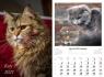 Kalendarz planszowy 2021 - Koty 13