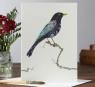 Karnet A046 B6 + koperta Ptak kos