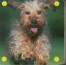 Mini kosteczka Pies
