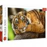 Puzzle 500: Portret tygrysa (37397)