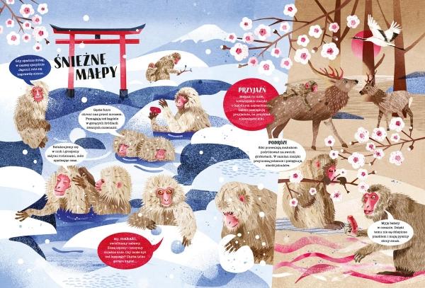 W świecie małp Gwis Asia