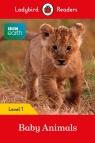 Ladybird Readers BBC Earth multi-copy Pack