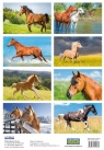 Naklejki - Konie