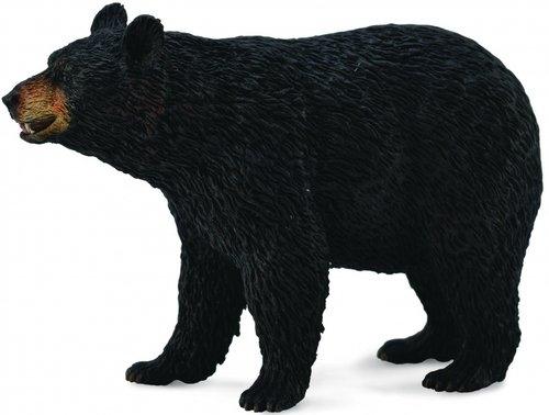 Niedźwiedź czarny amerykański