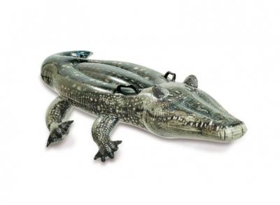 +57524+ Aligator