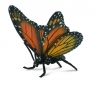 Motyl Królewski